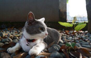 nature-cat-4361402